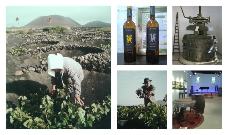 Weinmuseum Lanzarote
