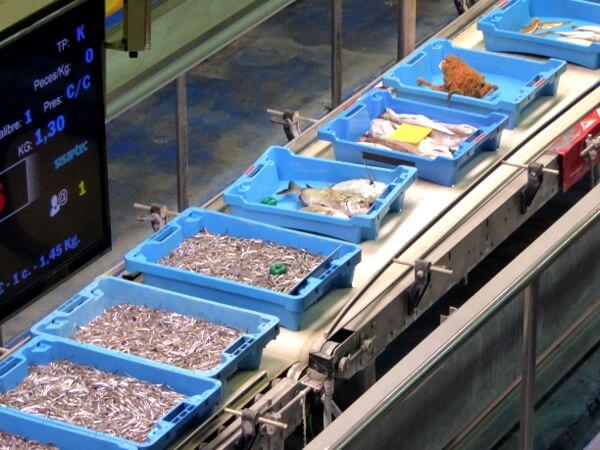 fischer Fischauktionshalle Palamos