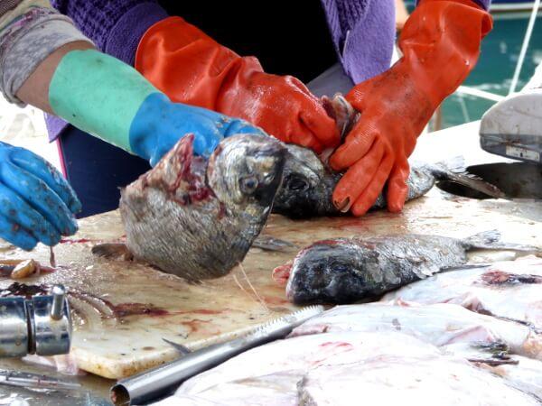 frische fische lekeitio hafen bizkaia