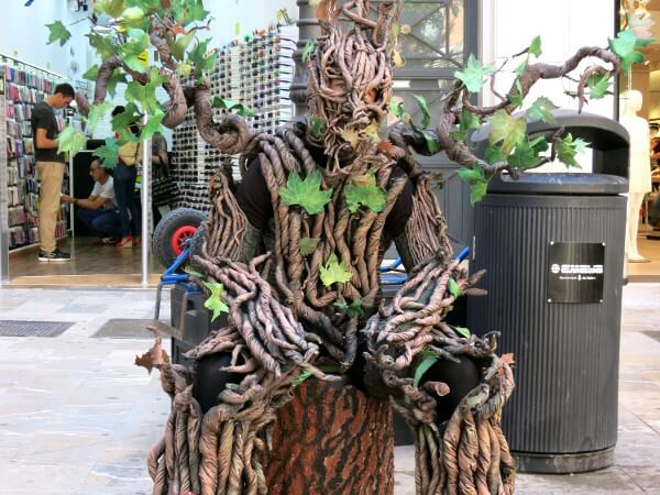 Baum Mallorca