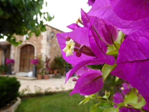 Hotel Mallorca blumen