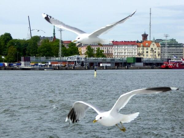 Möwen Suomenlinna Fähre Helsinki