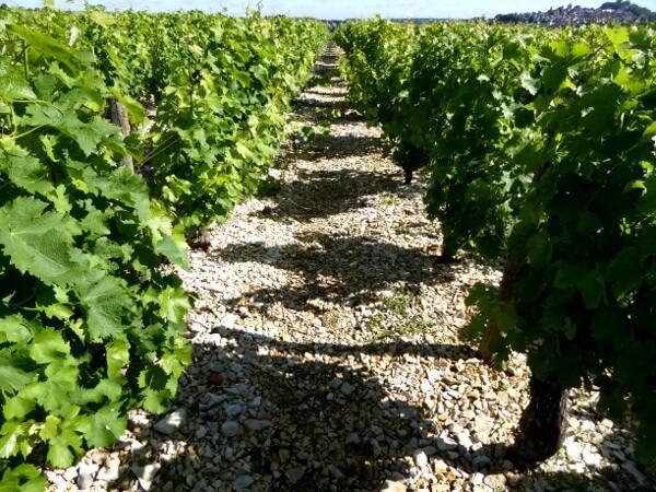 Sancerre Wein boden