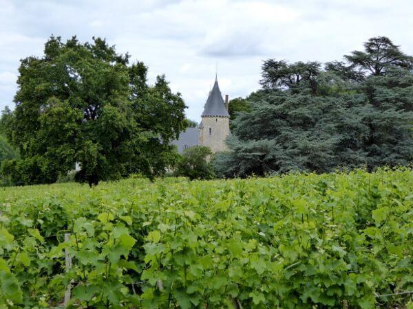 Schloss Anbau Sancerre Weine