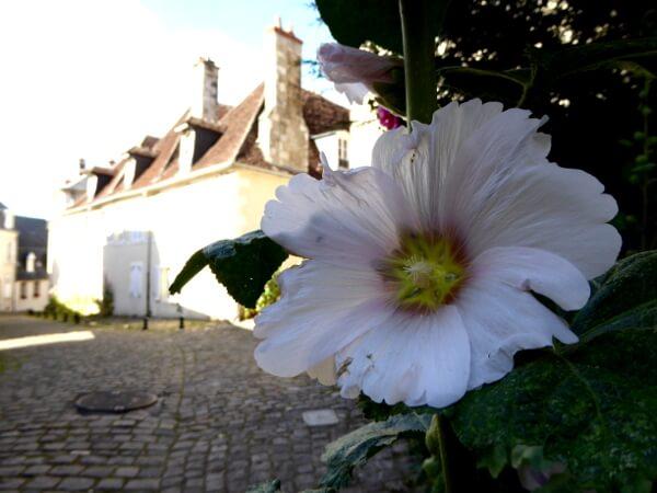 Frankreich bourges Blume