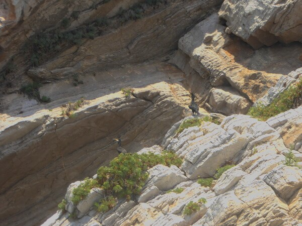 kormorane Sitges