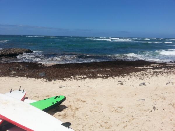 surfen fuerteventrua strand surfbrett