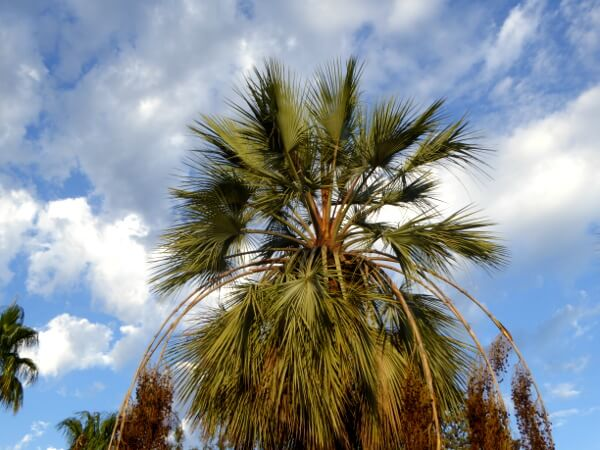 Palme jardi Botanic Blanes marimurtra