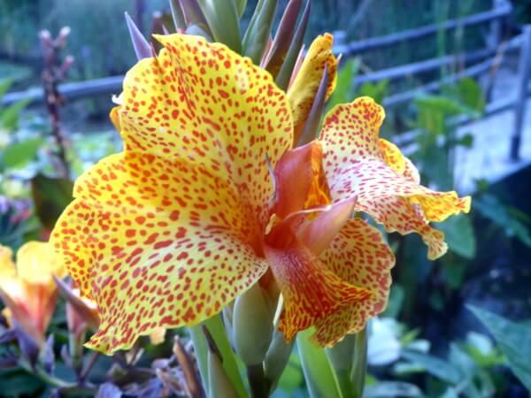 blumen im Jardi botanic Marimurtra Blanes