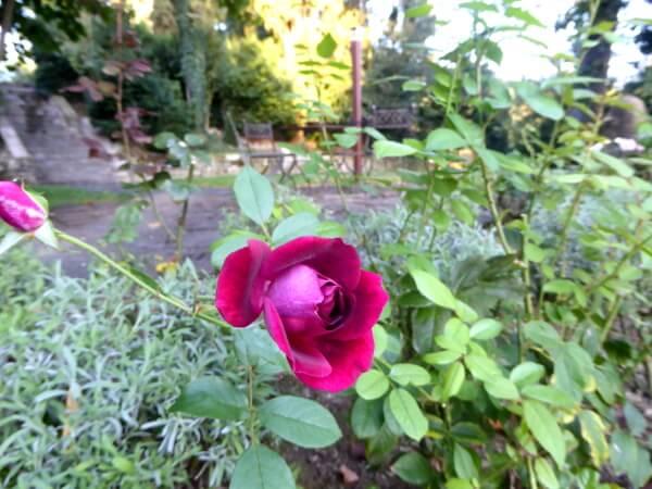 Agriturismo emilia romagna san ruffillo Garten Rose