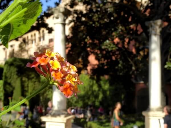 Alcazar Gärten Sevilla Blüte