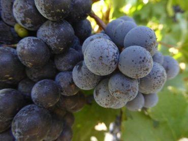 Die Weine der Emilia Romagna 4