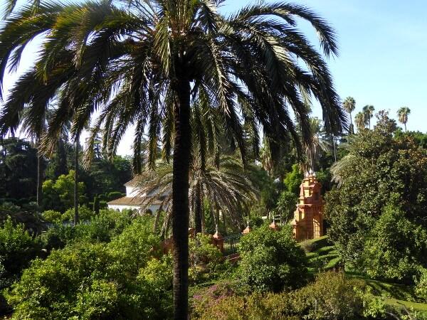 Palme Alcazar Garten Sevilla