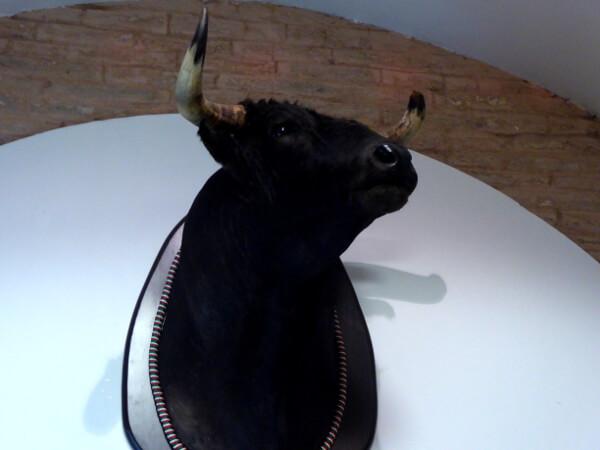 Stierkampf Sevilla Museum Arena Stier begnadigt