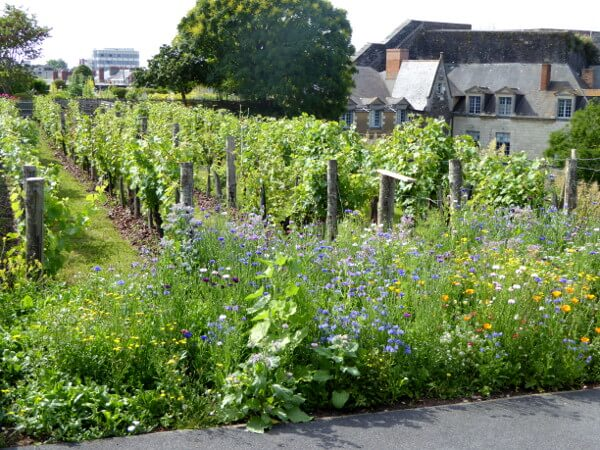 Angers Burg Schloss Garten