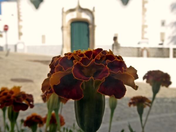 Blume Kirche Alte