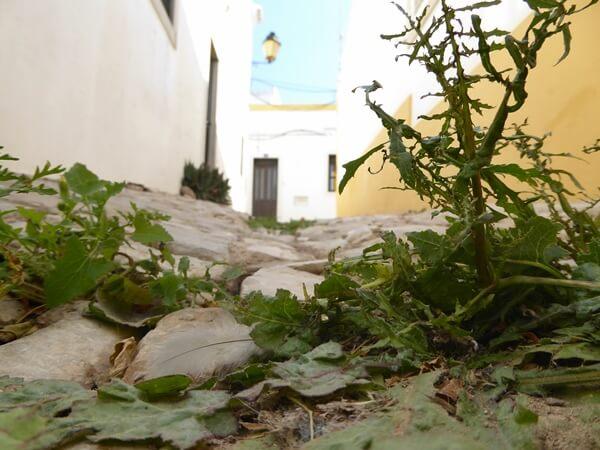 Grün setzt sich durch altstadt Loule