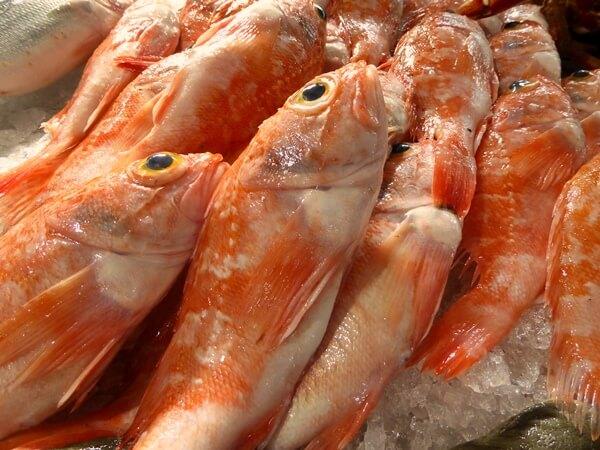 Markt Loulé Fische