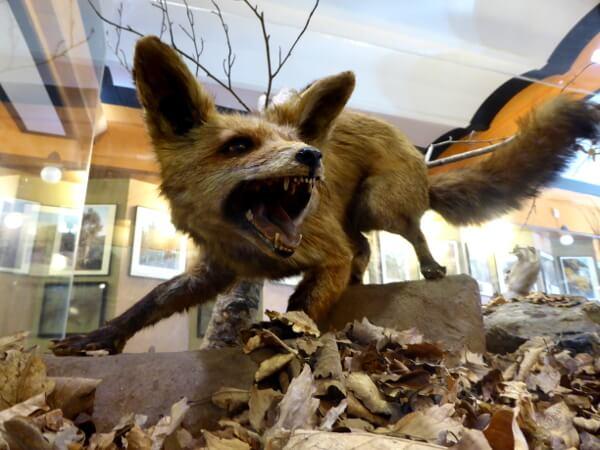 Fuchs Sant Hilari Sacalm Museum Museu Guilleries