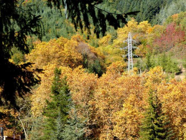 Herbst Wald Sant Hilari Sacalm .