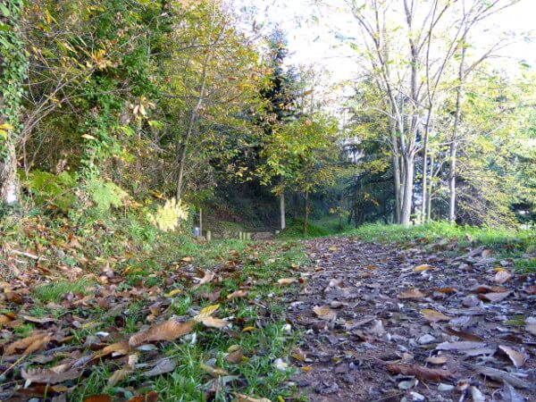 Herbst Wandern Wald Sant Hilari Sacalm