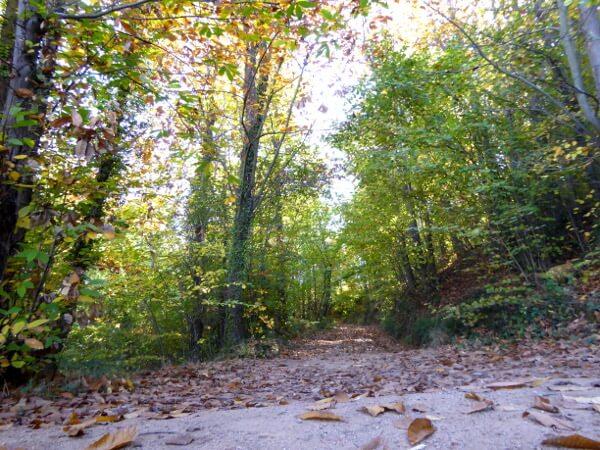 WAld Sant Hilari Sacalm wanderwege