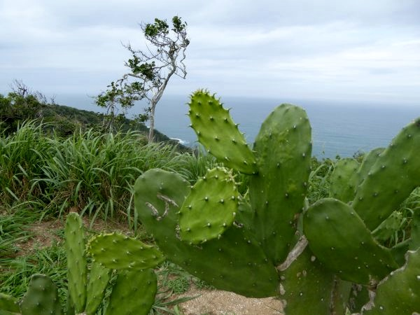 Buzios rundfahrt bucht praia cactus