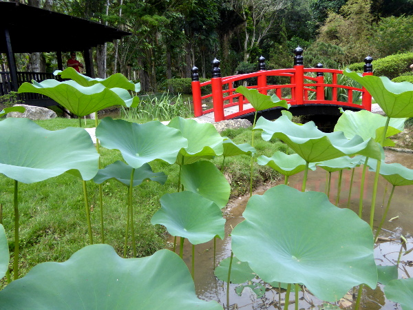 Japanisch Brücke Jardim Botânico