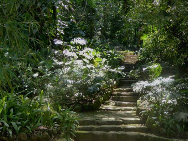 Jardim Botânico dschungelartig