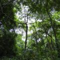 Parque da Catacumba - Natur pur statt Favela 9