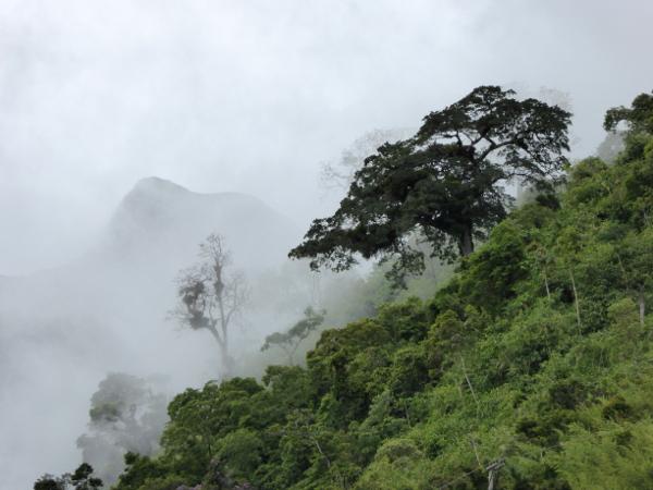 Teresopolis Nebel am Dedeo de deus