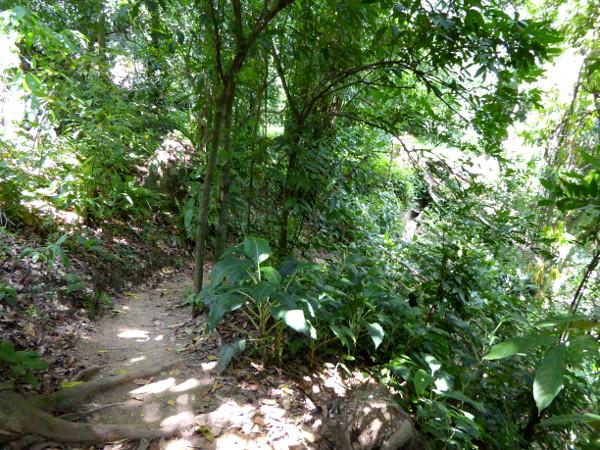 Wanderweg im Parque de Catacumba Rio de Janeiro