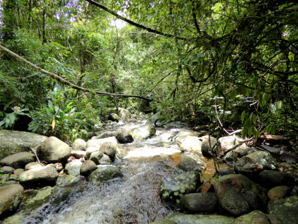 Wasserlauf Parque Serra dos Orgaos Teresopolis