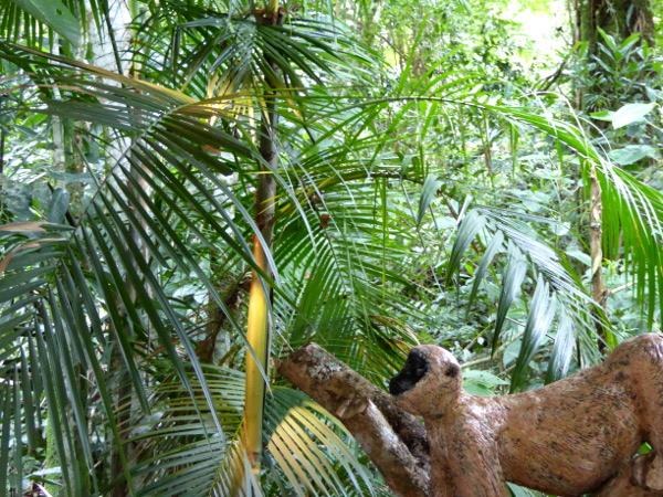 besucherzentrum Parque serra dos orgaos bedrohte pflanzen tiere