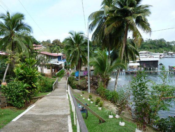Isla Bastimentos : Kakao und Erdbeerfrösche 26