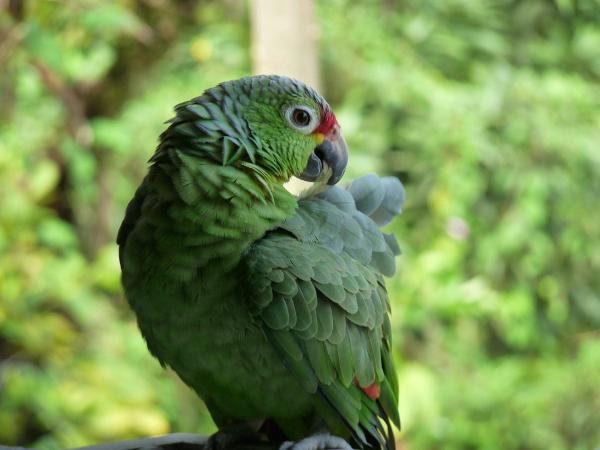 Bastimentos hotel Ushuaia Tika Bar Papagei