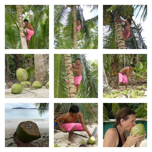 Isla Carenero Bocas del Toro Kokosnuss verkauefer