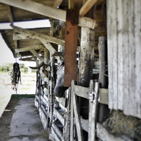 pferdestall Mato Grosso Brasilien