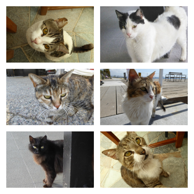 Katzen Zypern