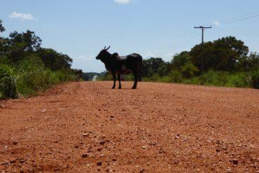 Von Goldgräbern und Cowboys in Cuiabá 8
