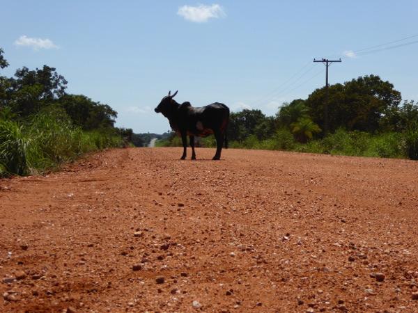 Kuh Transpantaneira Mato Grosso
