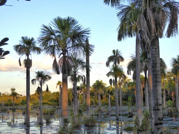 lagune der Aras am ABend Brasilien Mato Grosso Bom Jardim-01
