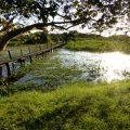 Die fabelhafte Welt des Pantanal 28