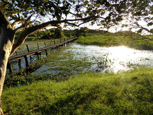 steg im Abendlicht schoenstes Bild Pantanal