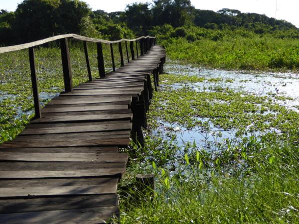 steg im Pantanal sumpfgebiet Brasilien