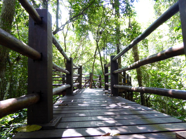 wald weg schnorcheln bom jardim brasilien
