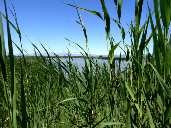 Ebrodelta Naturpark freibeuter reisen
