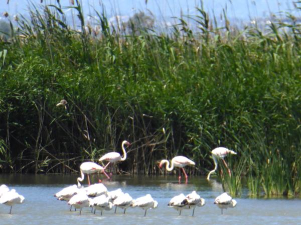 Flamingos Naturpark Ebrodelta freibeuter reisen