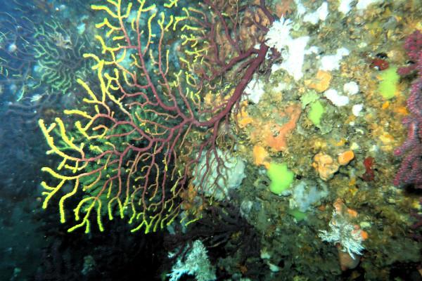 Islas Medas Costa Brava Diving Freibeuter Reisen bunte unterwasserwelt