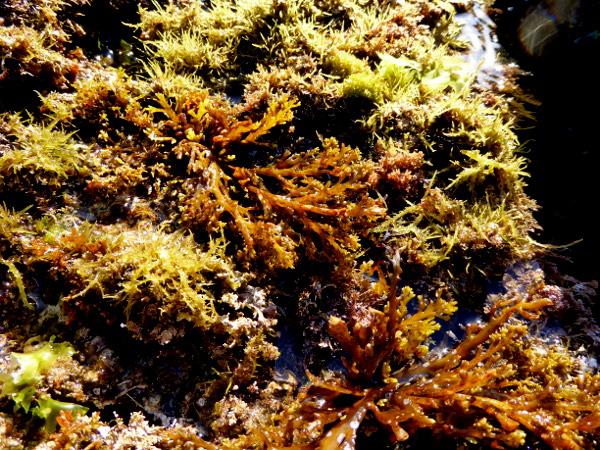 Llança Kajak Freibeuter Reisen algen Costa Brava
